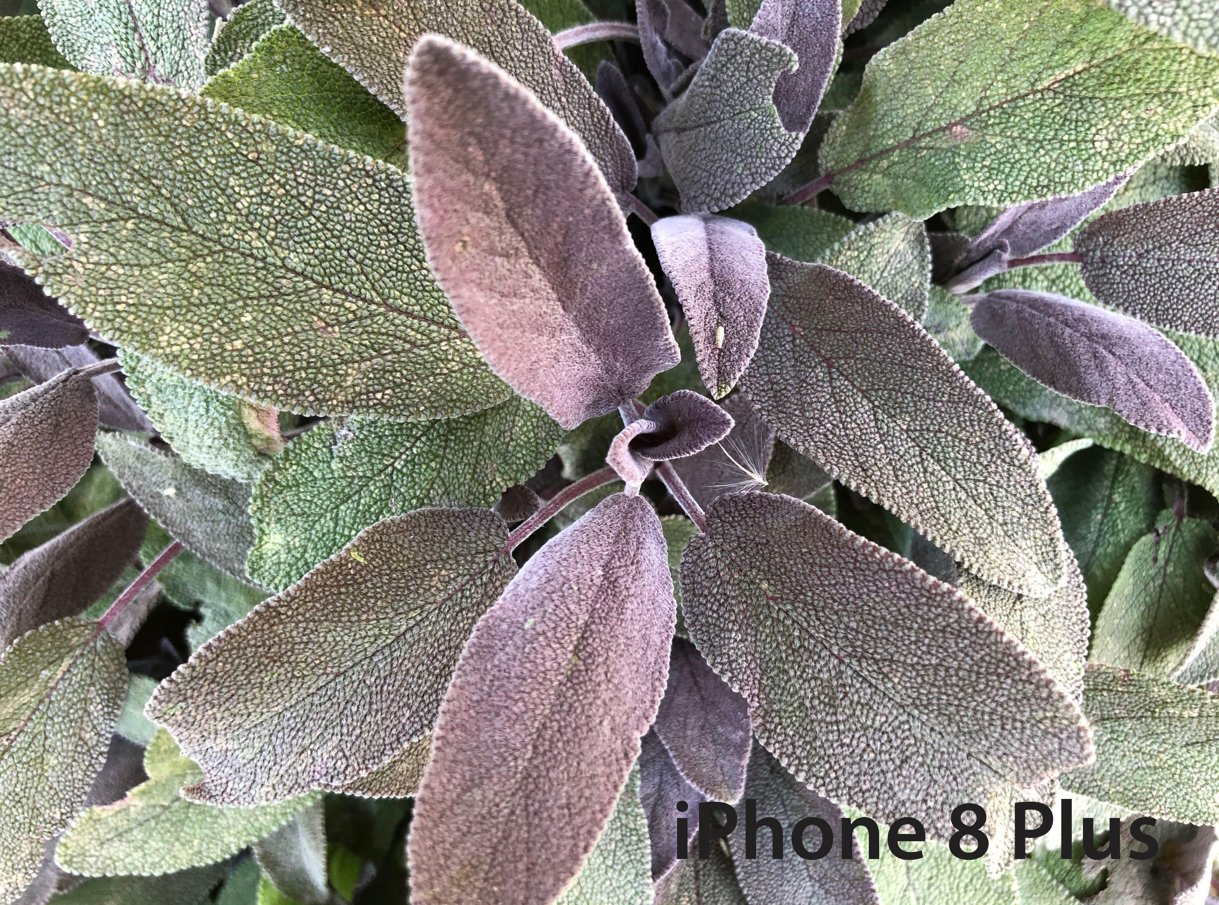 iphone-close-up-sage