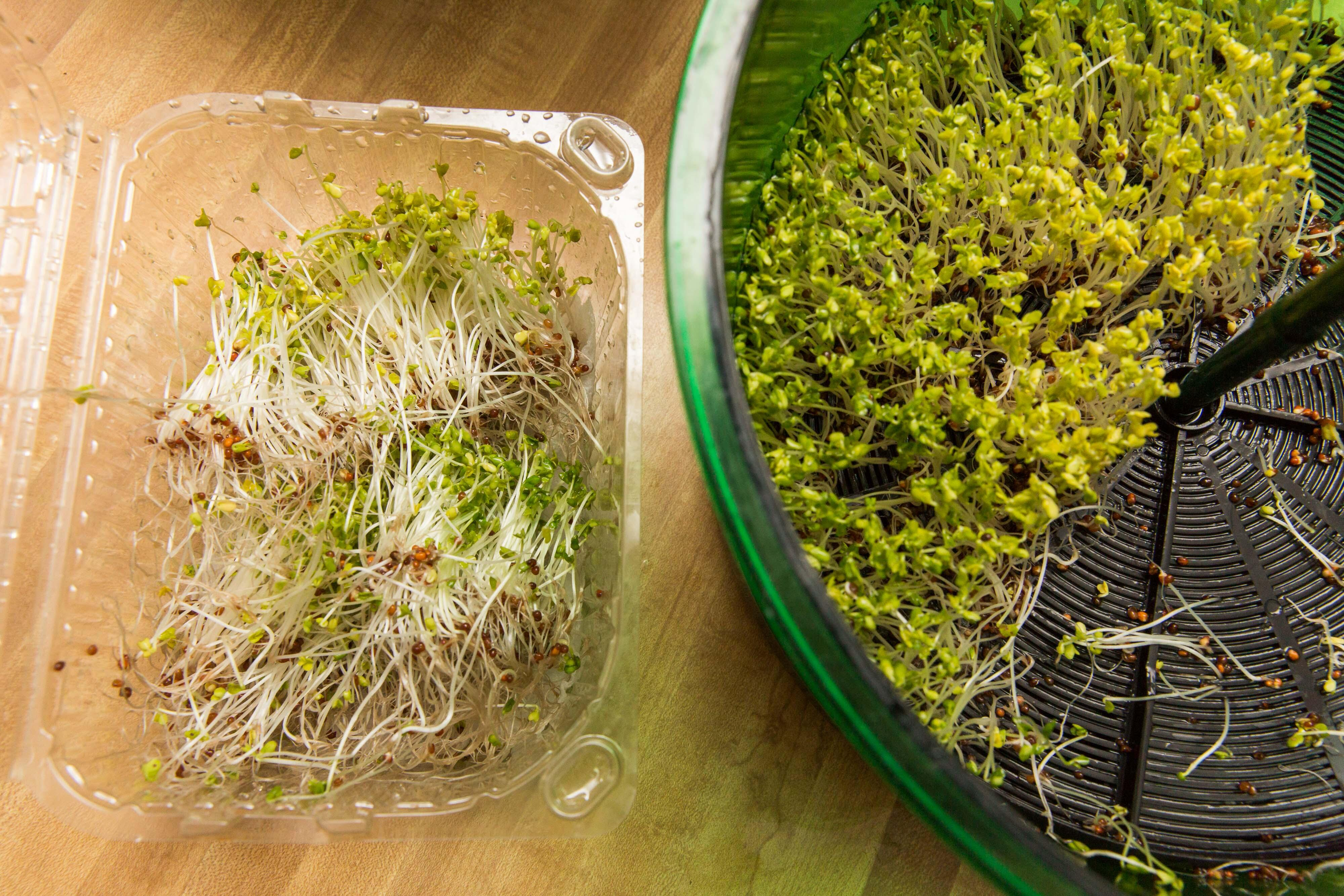 how to grow your own sprouts in the freshlife FL-3000