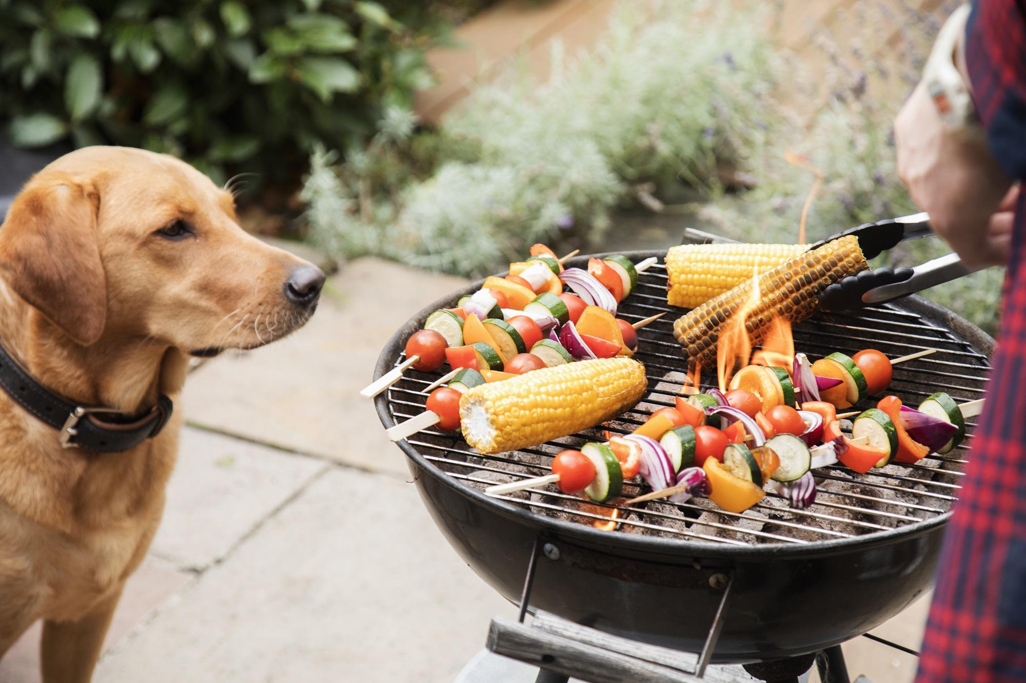 Labrador dog looks interested at food on barbecue.