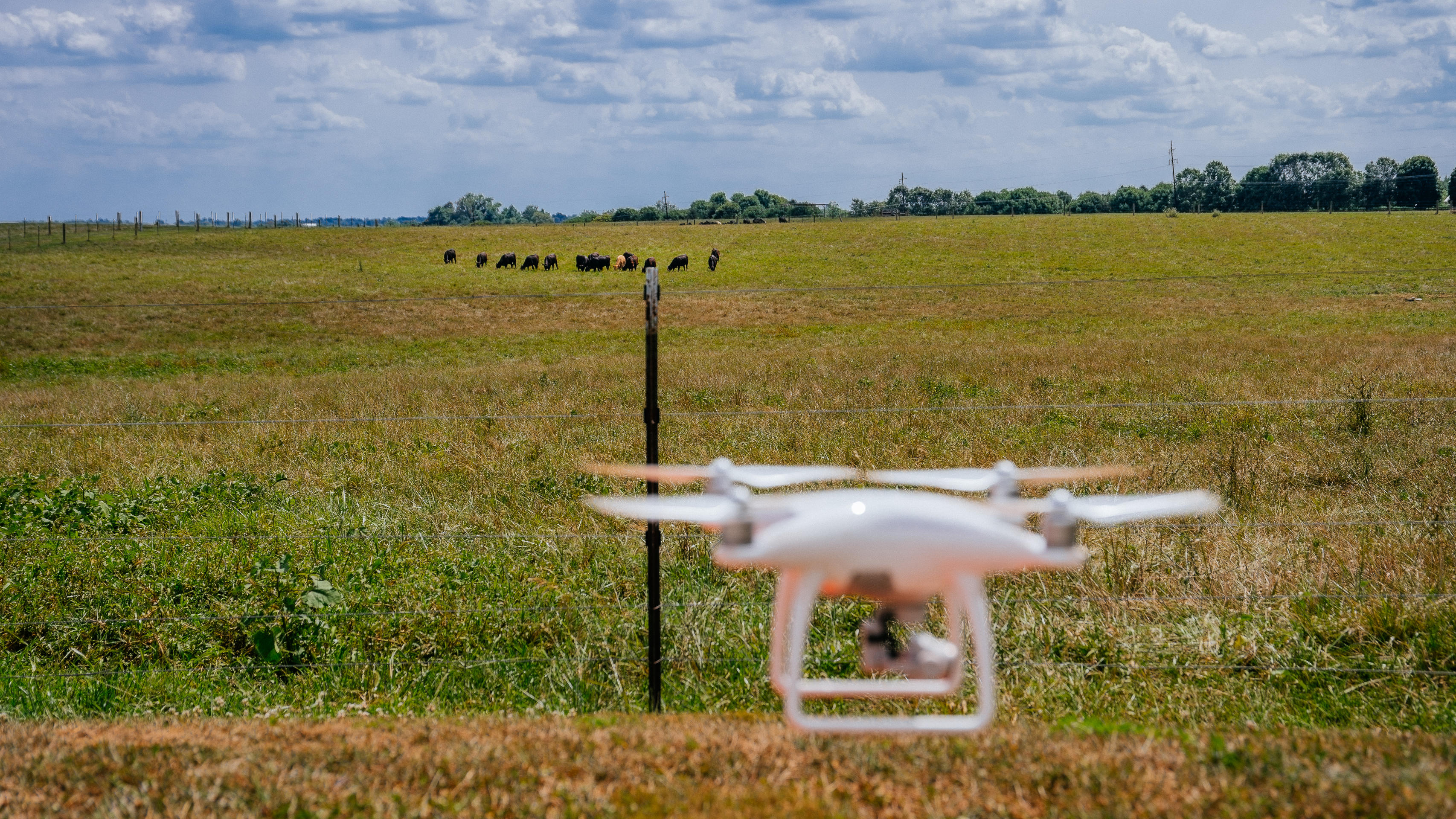 cattle-drones-43