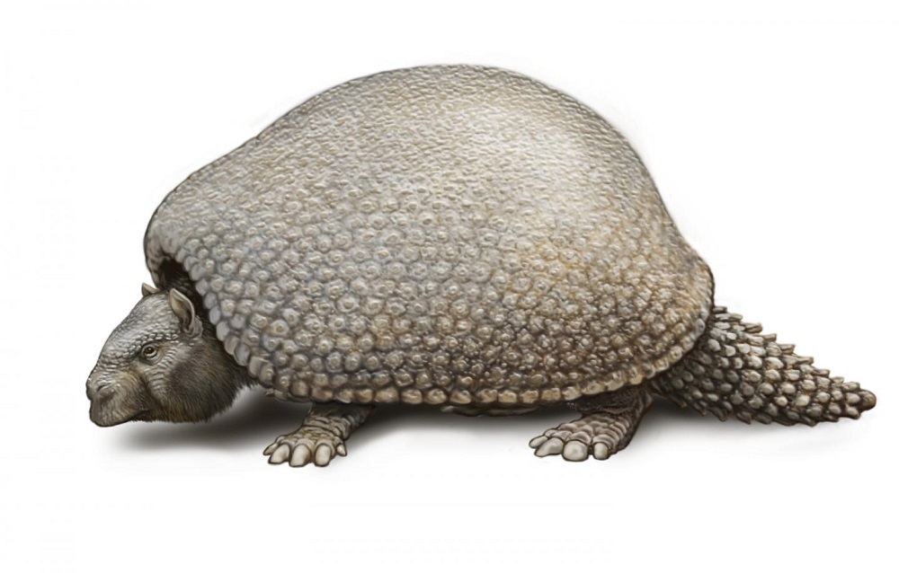 Armadillos were 'the size of a Volkswagen Beetle'!