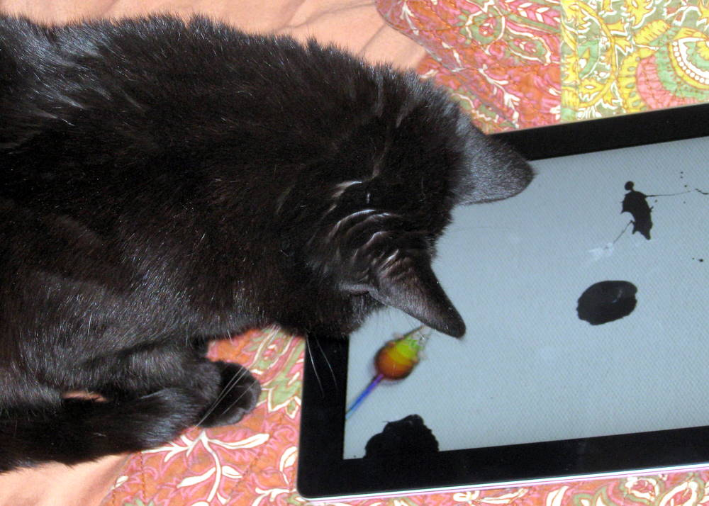 iPad cat painting in action