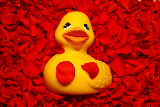 Photographer Colleen Fletcher creates fun, creative photos of rubber ducks.