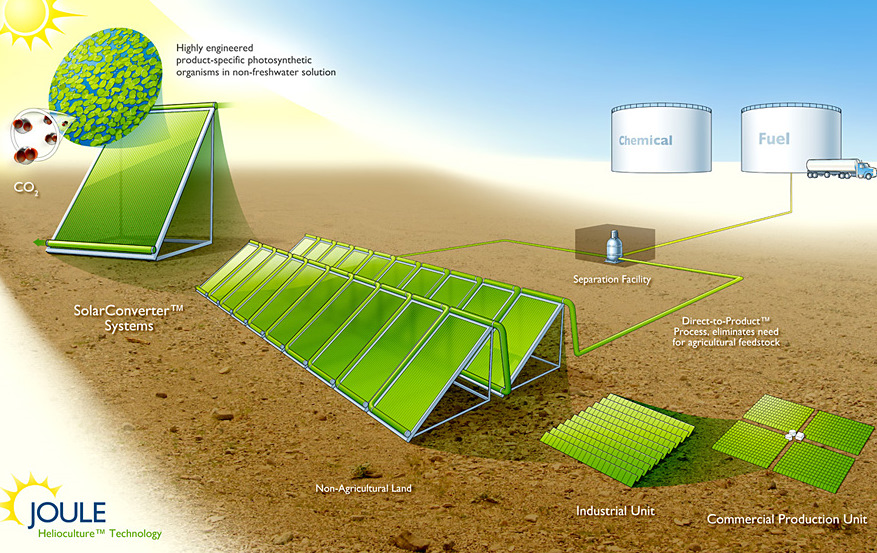 A diagram of how a Joule facility would work with bioreactors growing micro-organisms with sunlight and CO2 in water. A separator removes the end product--liquid fuel or chemicals.