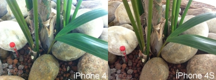 iPhone 4S camera test plant