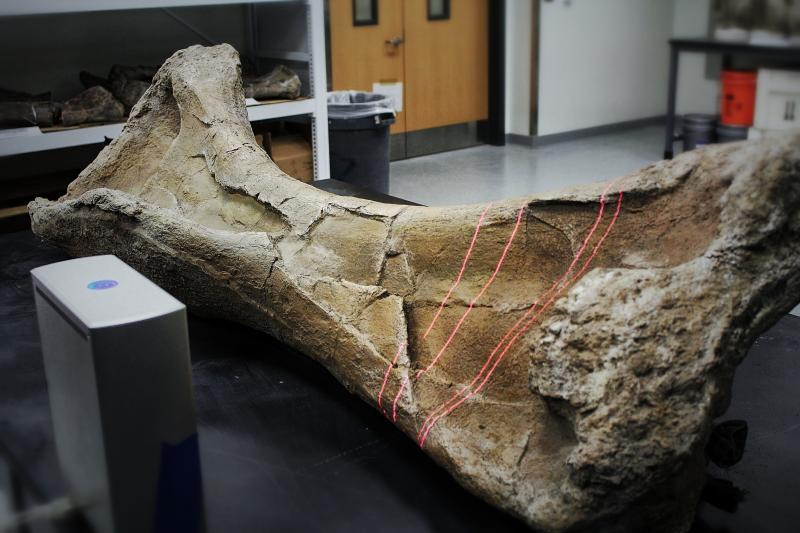 Drexel University researchers create a 3-D scan of the humerus bone from a Paralititan, one of the largest sauropod dinosaurs ever found.