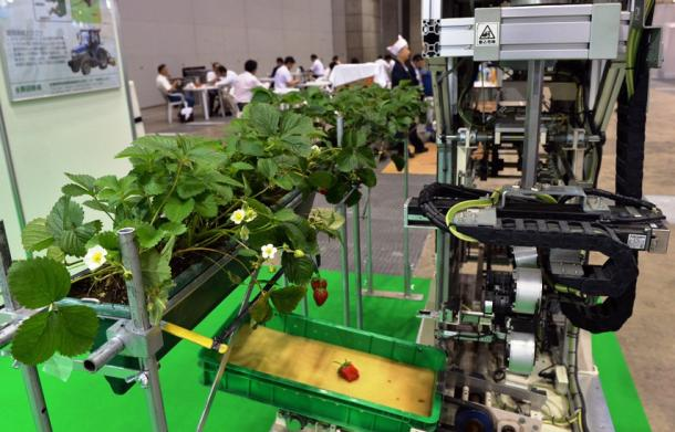 A strawberry-picking robot