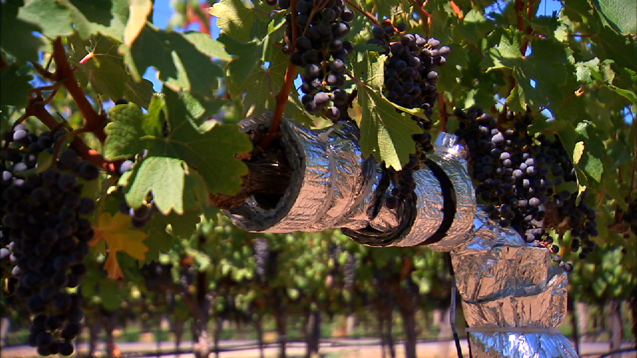 Video: High-tech wine