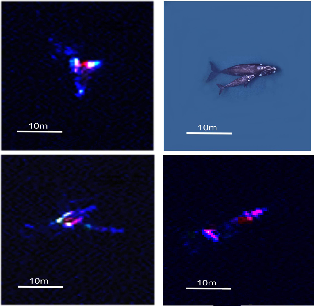 Whale satellite imagery