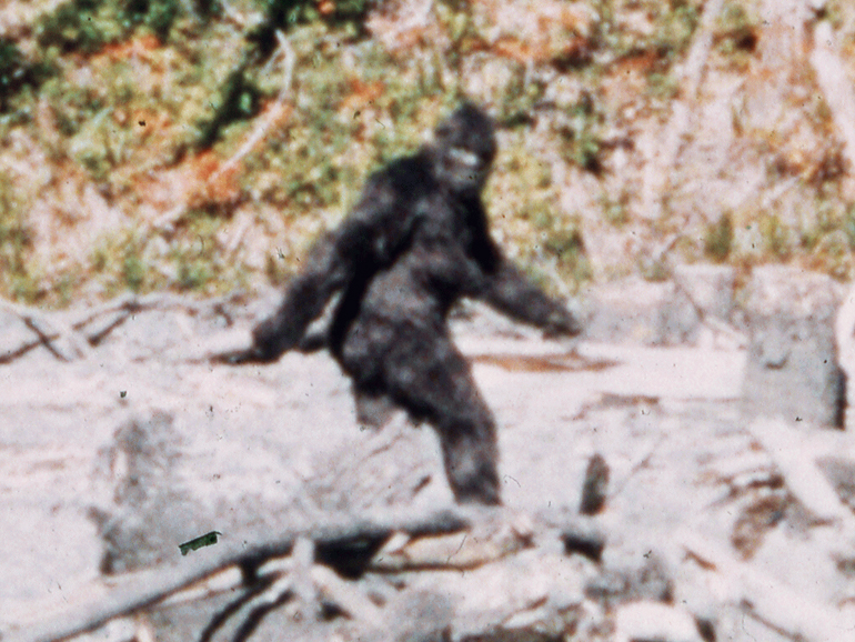 Bigfoot hair samples ruled out through DNA analysis - CNET