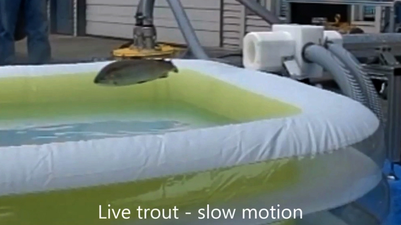 Video: Whooshh transport launches salmon at 22 mph​,​ saving lives, Ep. 170