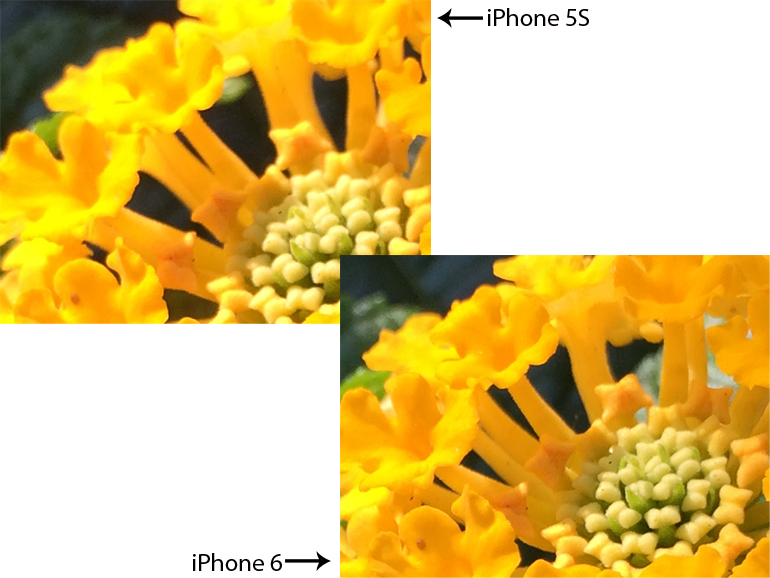 Camera Iphone 6 vs 5s Iphone 5s Versus Iphone 6