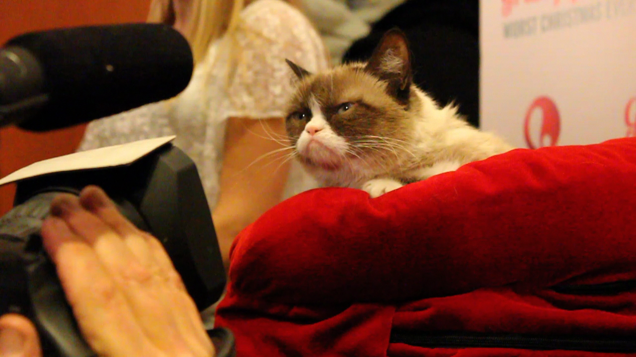 Video: CNET gets one-on-one time with the famed Grumpy Cat