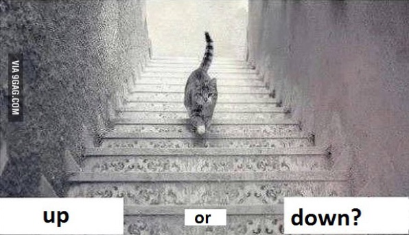 Web S New Question Is This Cat Going Up Or Down The