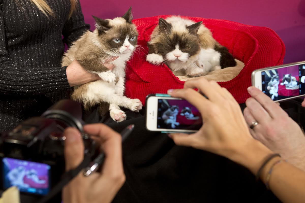 Grumpy Cat, left, poses next to Grumpy's animatronic figure at Madame Tussauds San Francisco on December 8, 2015  Photo by Beck Diefenbach / Madame Tussauds