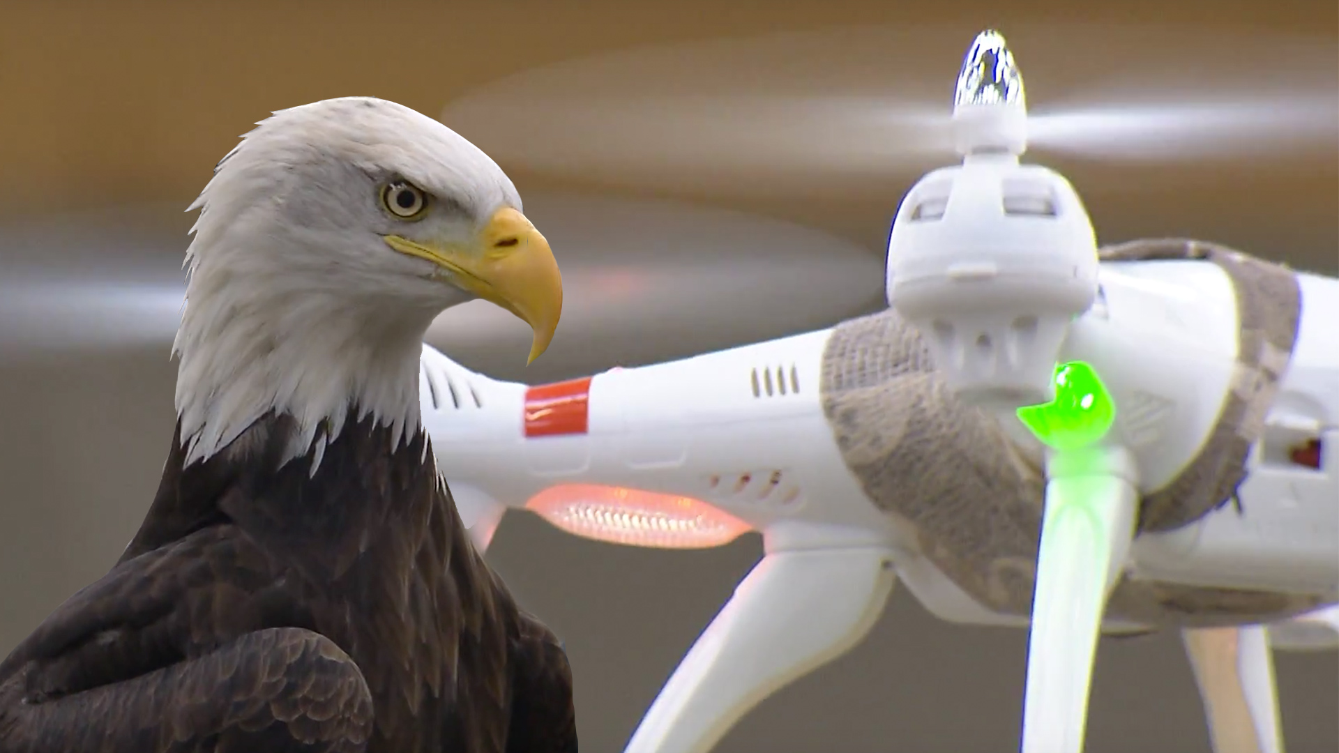 Video: Drone-snatching eagles ready to stop illegal flights (Tomorrow Daily 307)
