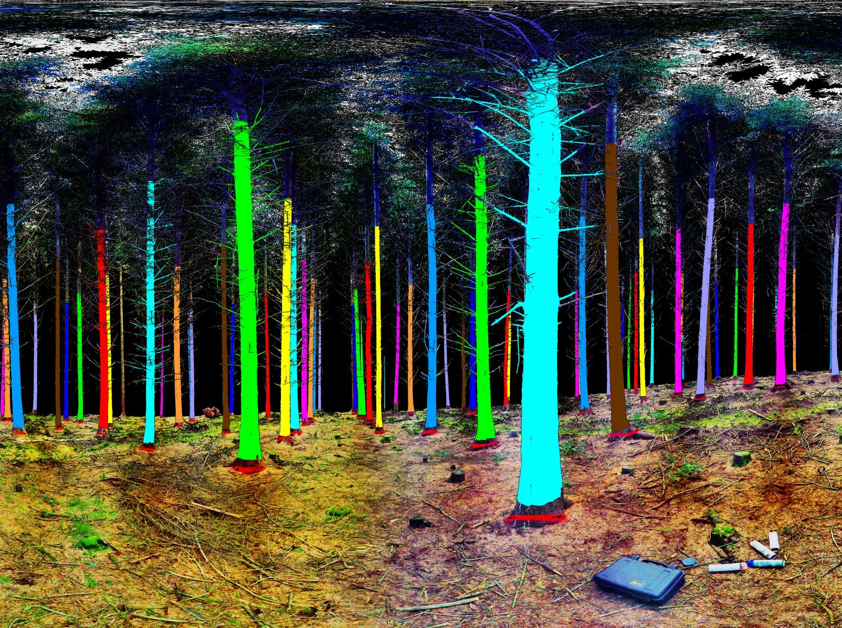 <p>The results of a woodland laser scan.</p>