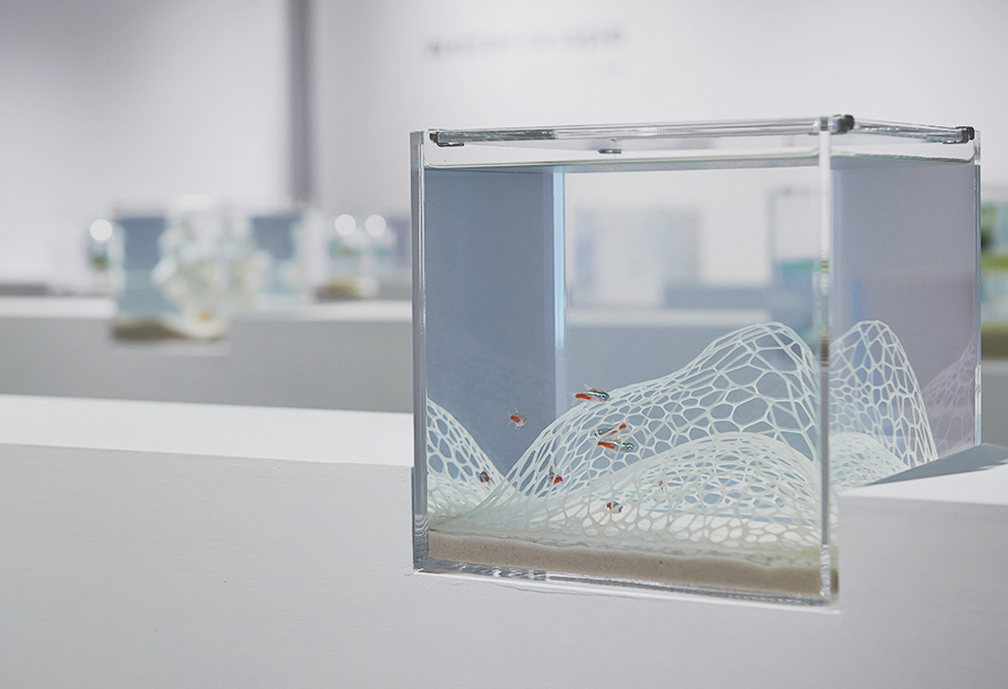 3D-printed aquariums are minimalist and beautiful
