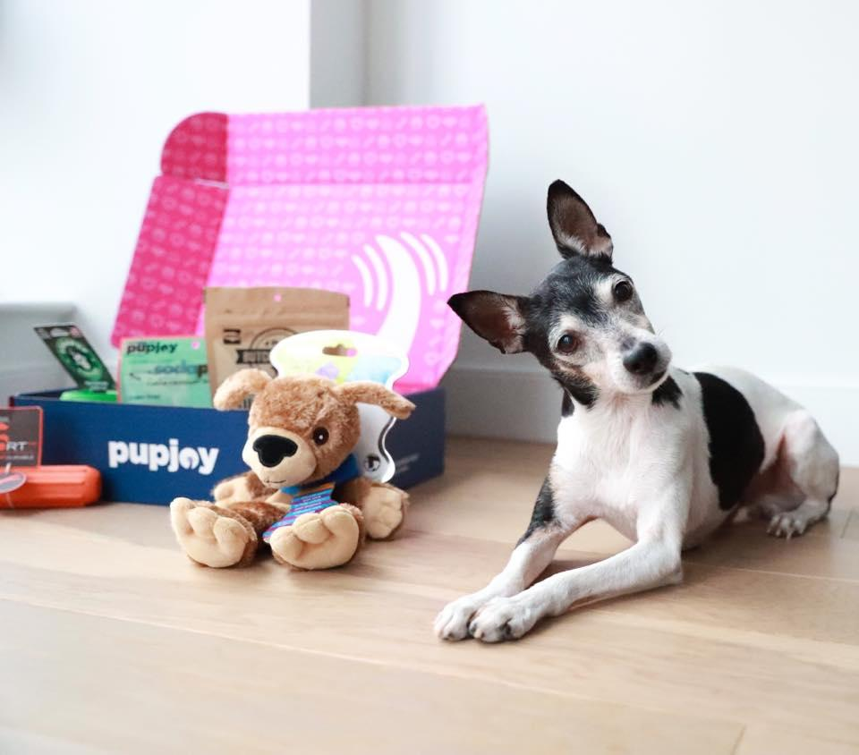 The best dog food delivery for 2021     - CNET