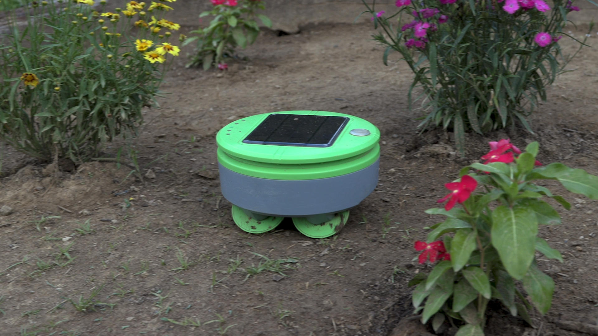 Video: Tertill robot weed trimmer actually works