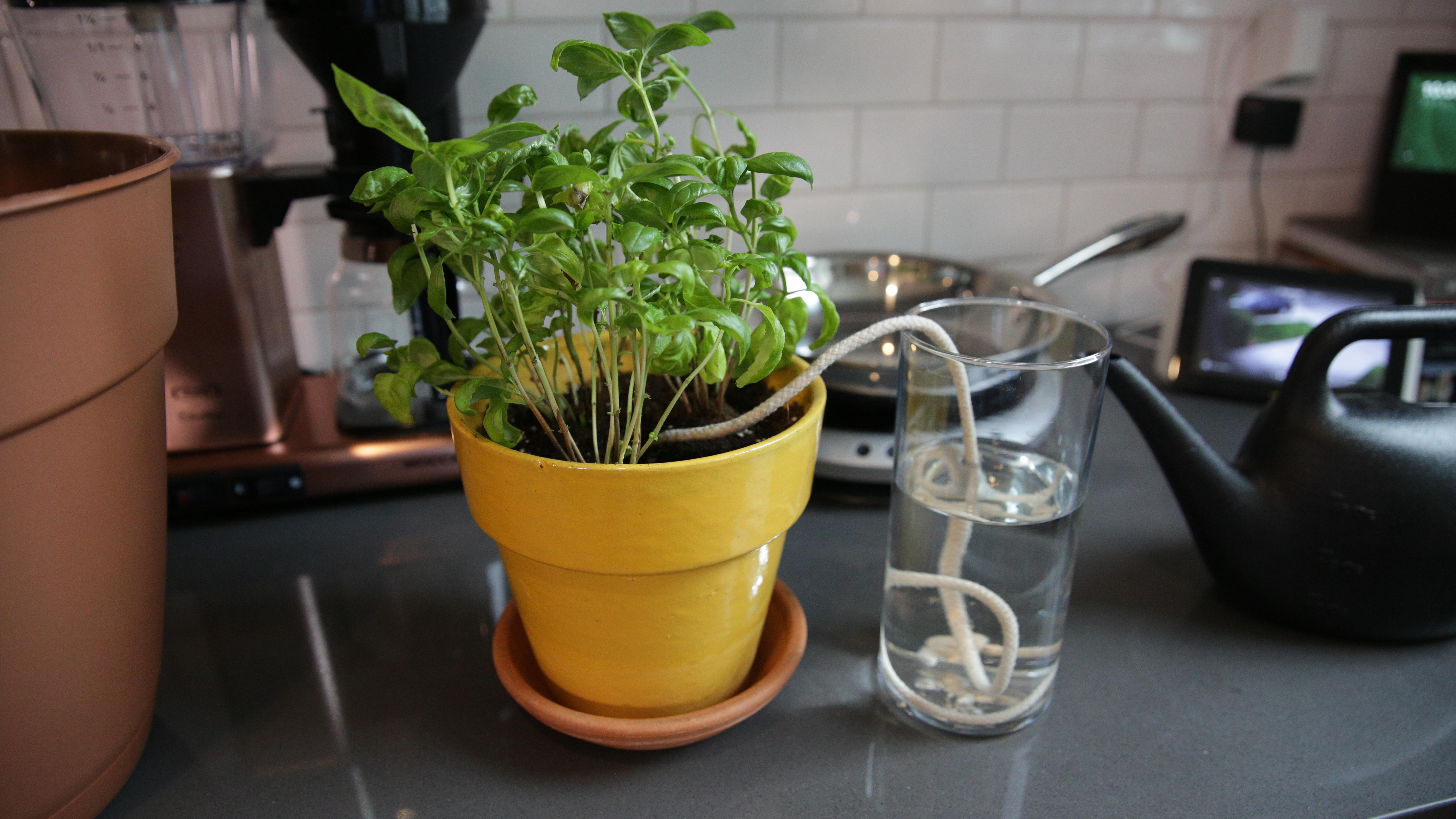 How to water your plants while you're away   CNET