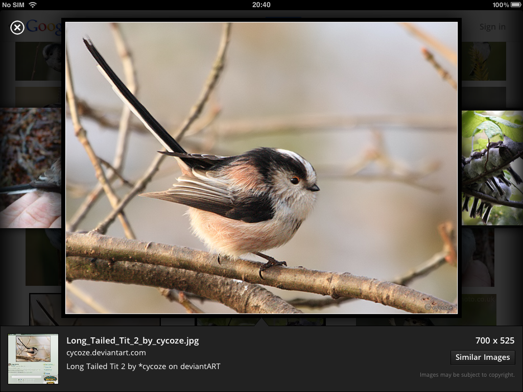 Google's new image carousel lets you flick through images on your iPad.