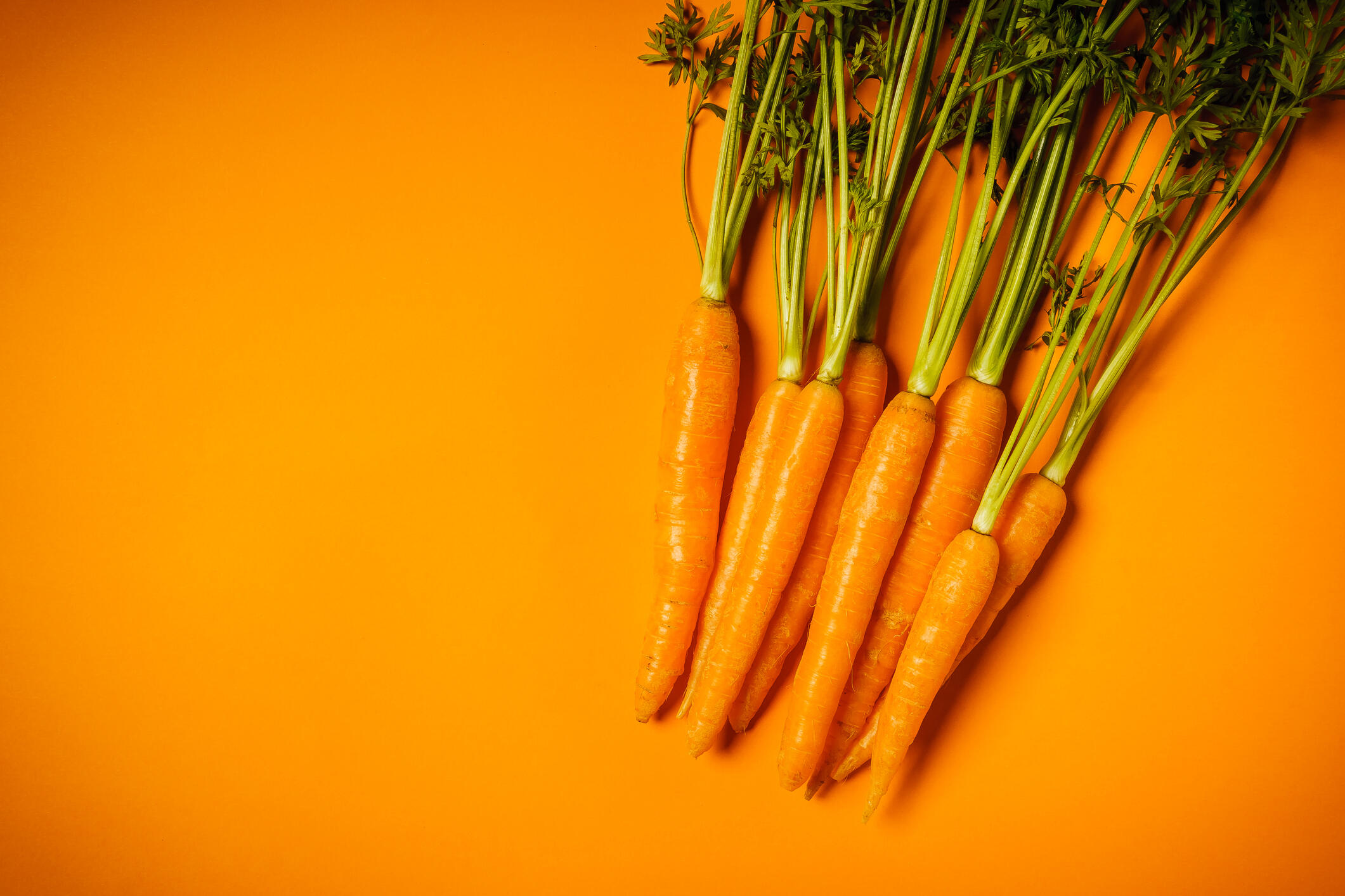 carrots on orange background