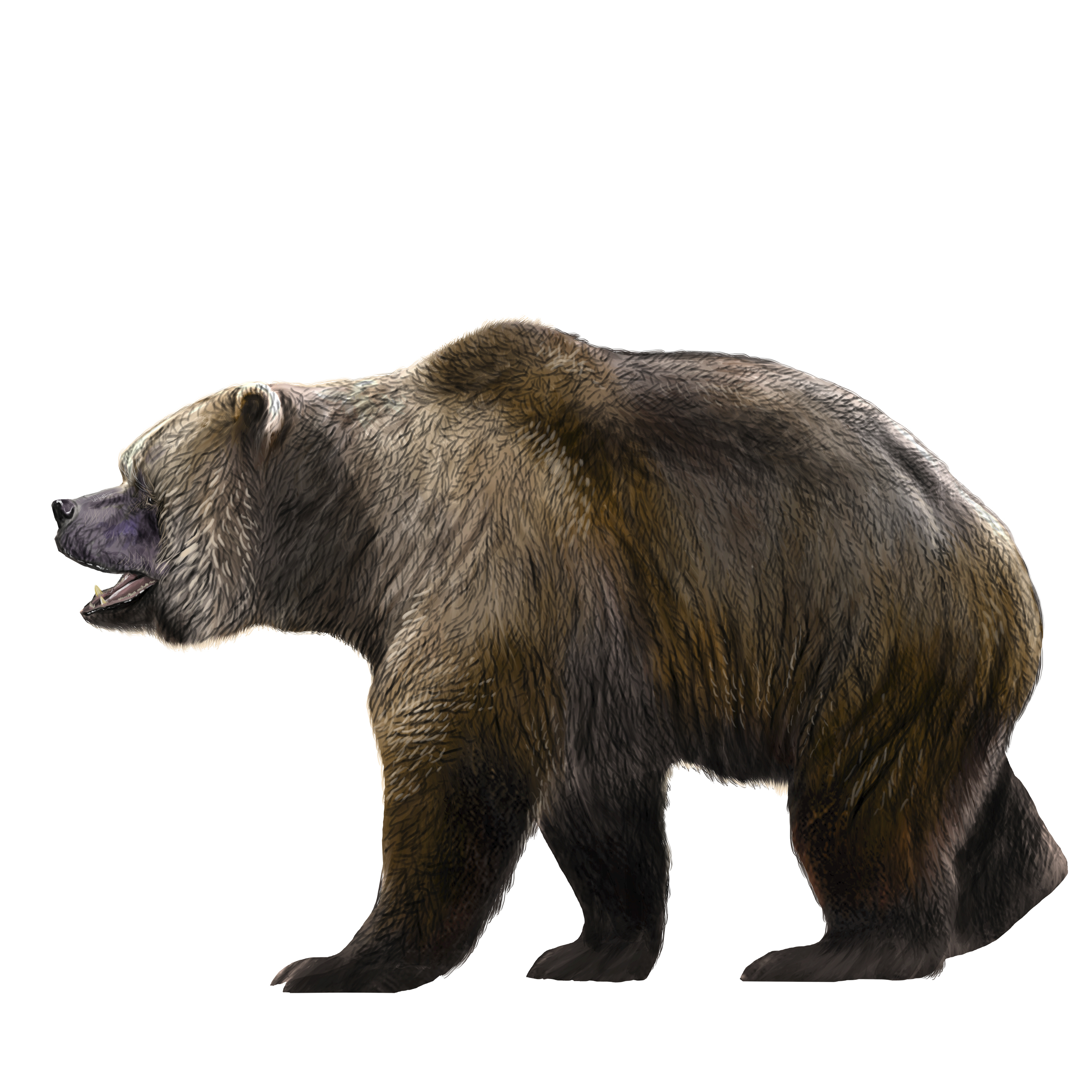 A bear twice your height