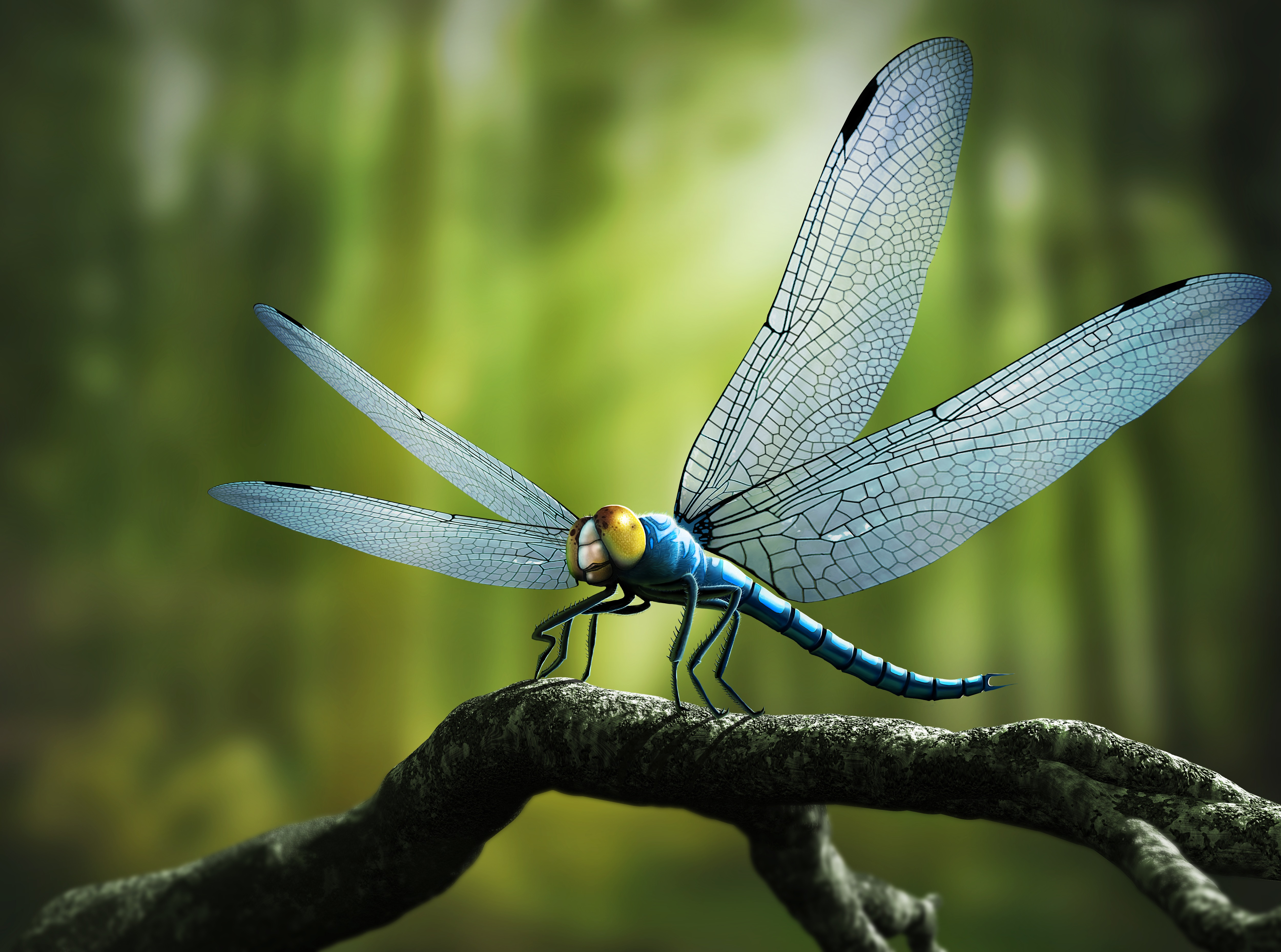 A dragonfly you'd need a tennis racquet to swat