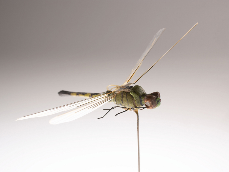 The Dragonfly Insectothopter