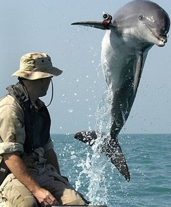 dolphin and handler