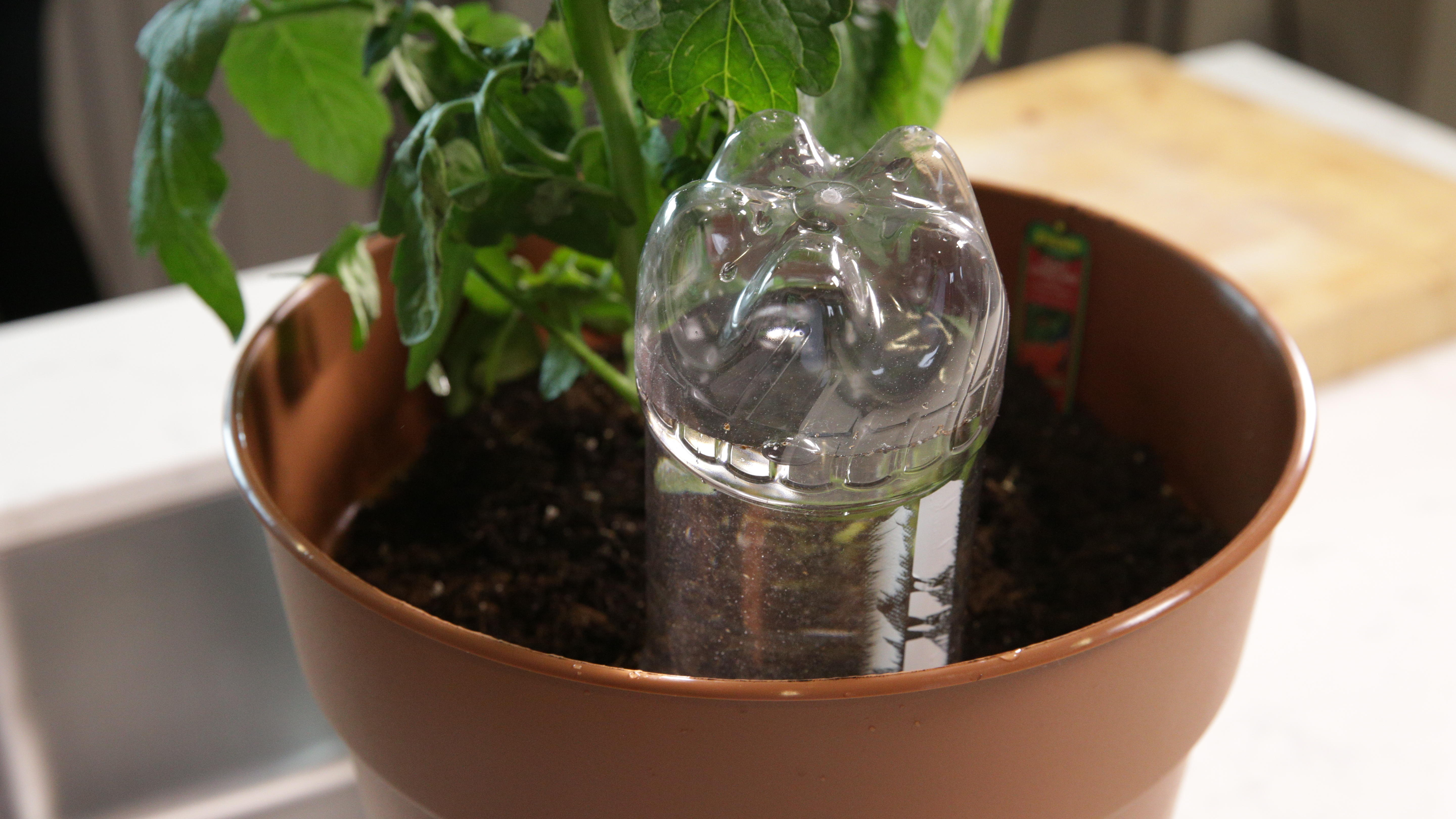 Water Your Plants While You Re Away, How To Care For Houseplants While On Vacation