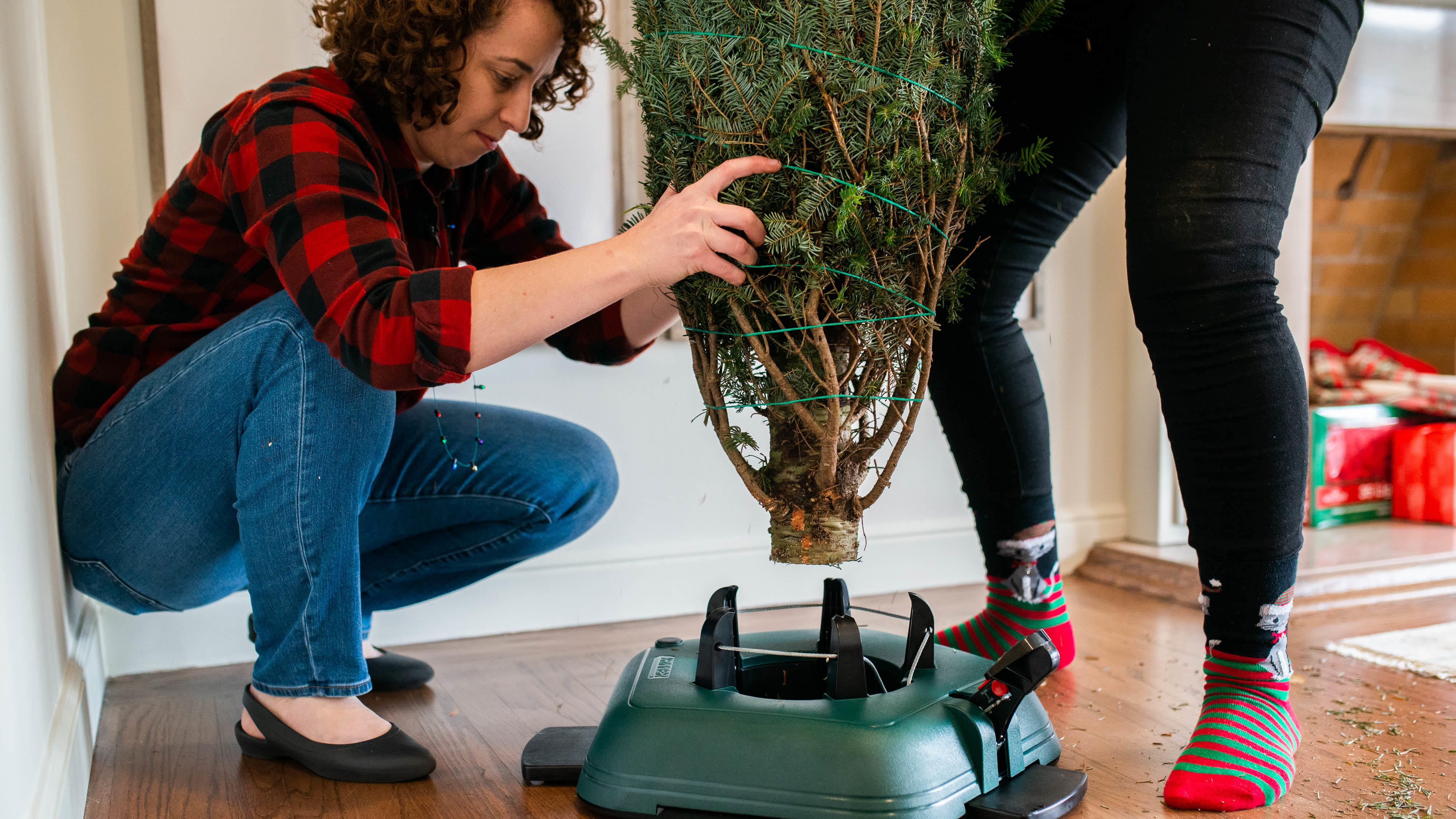 Keeping your tree healthy