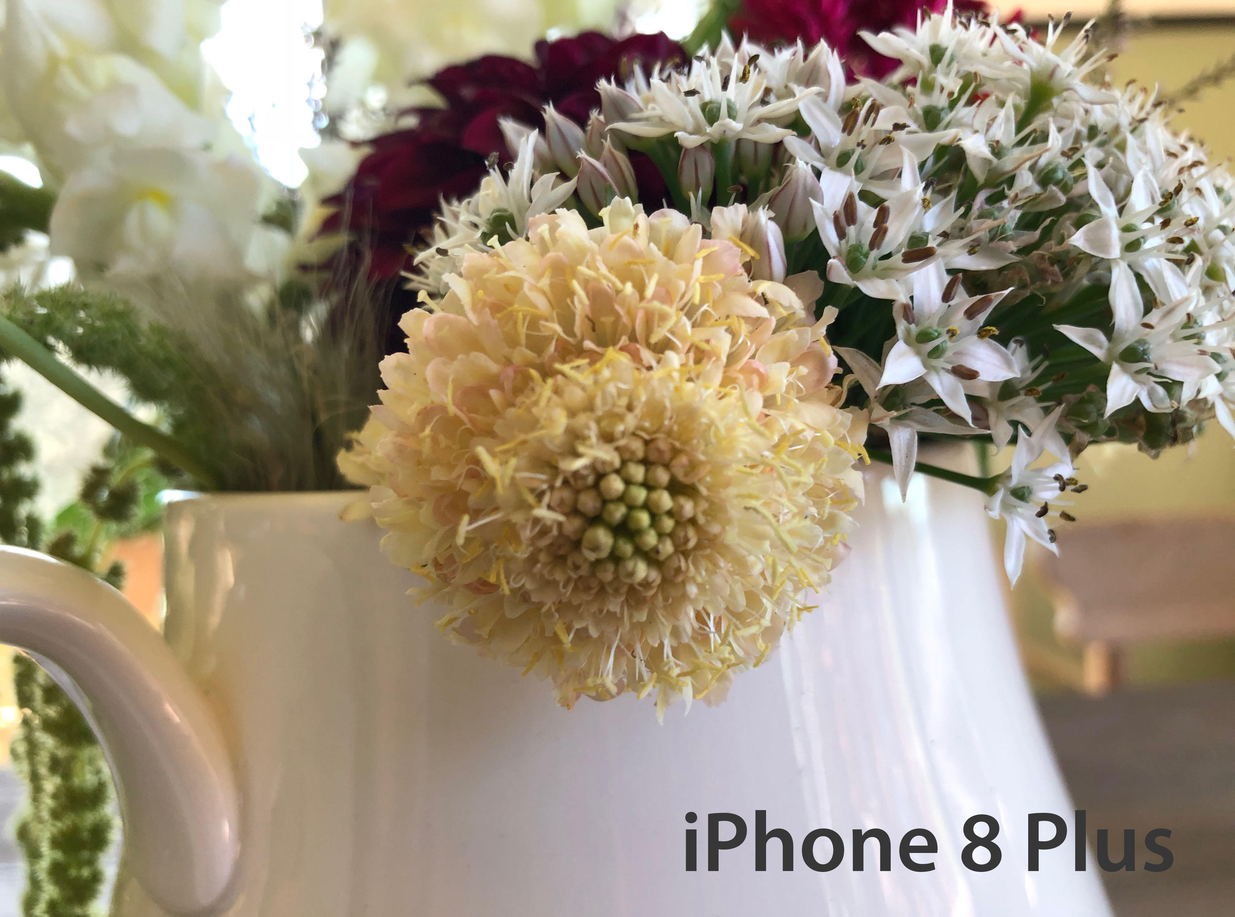 iphone-close-up-flower