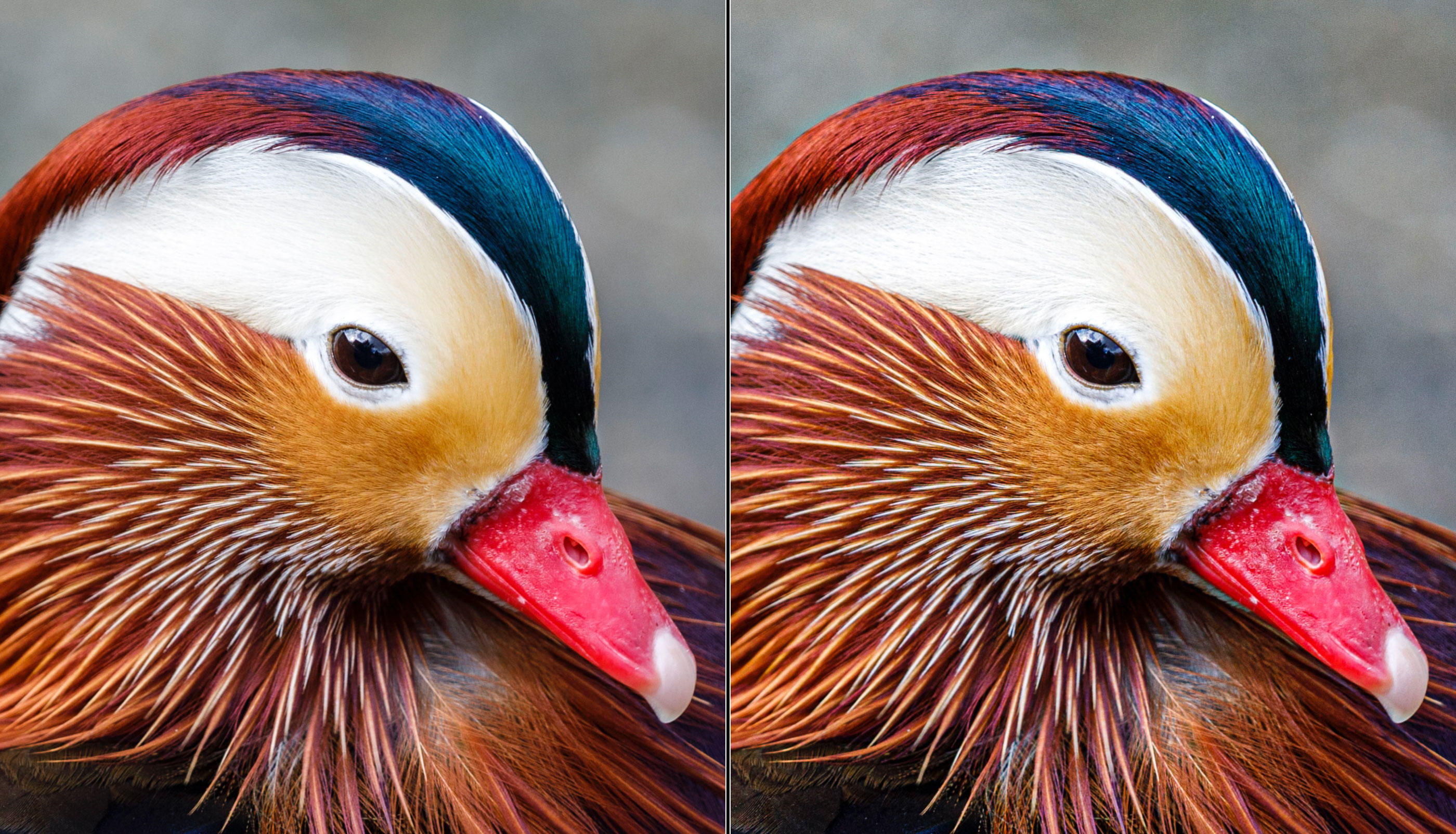 Lightroom texture tool and duck feathers