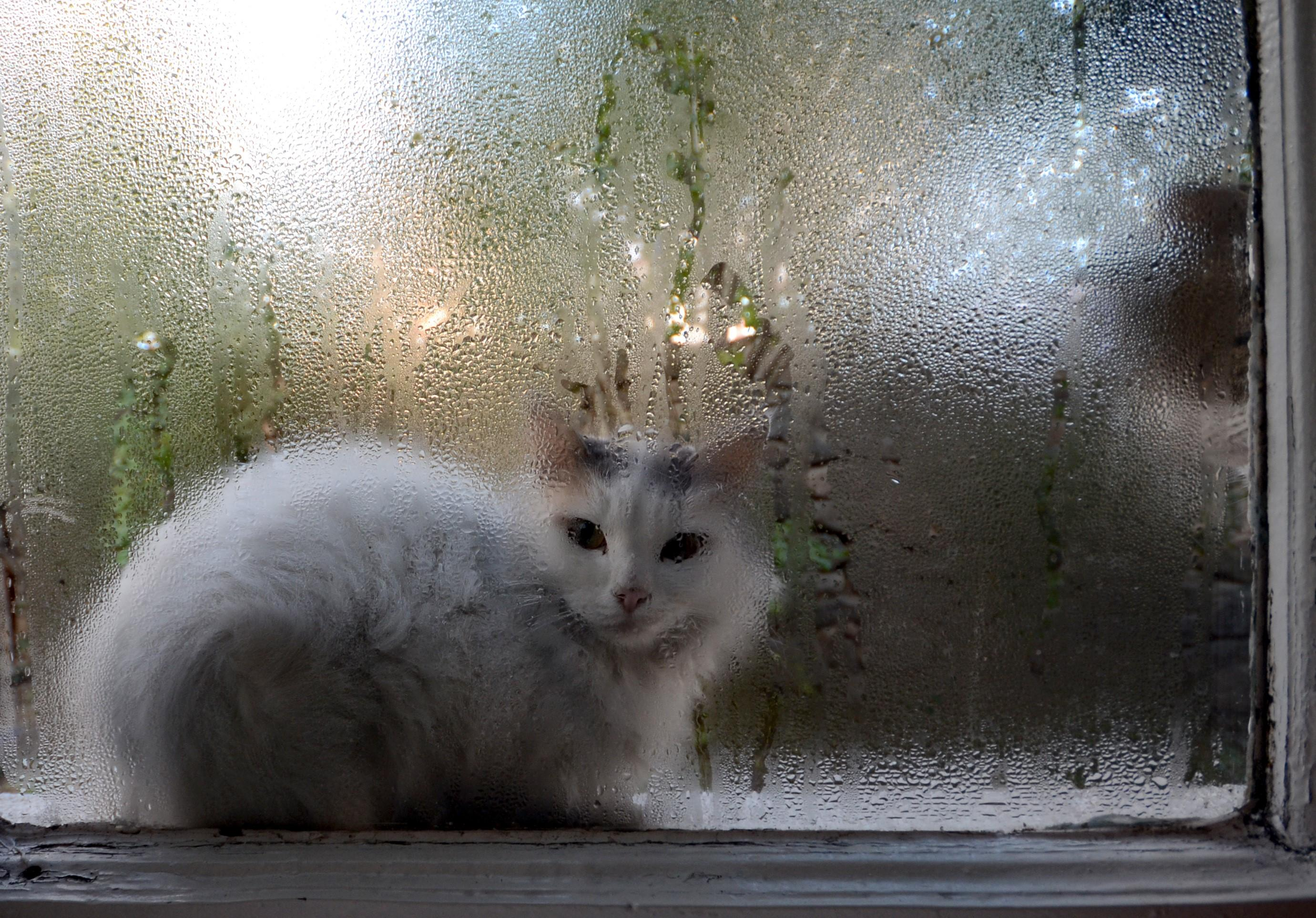 A cat looks through a window with condensation