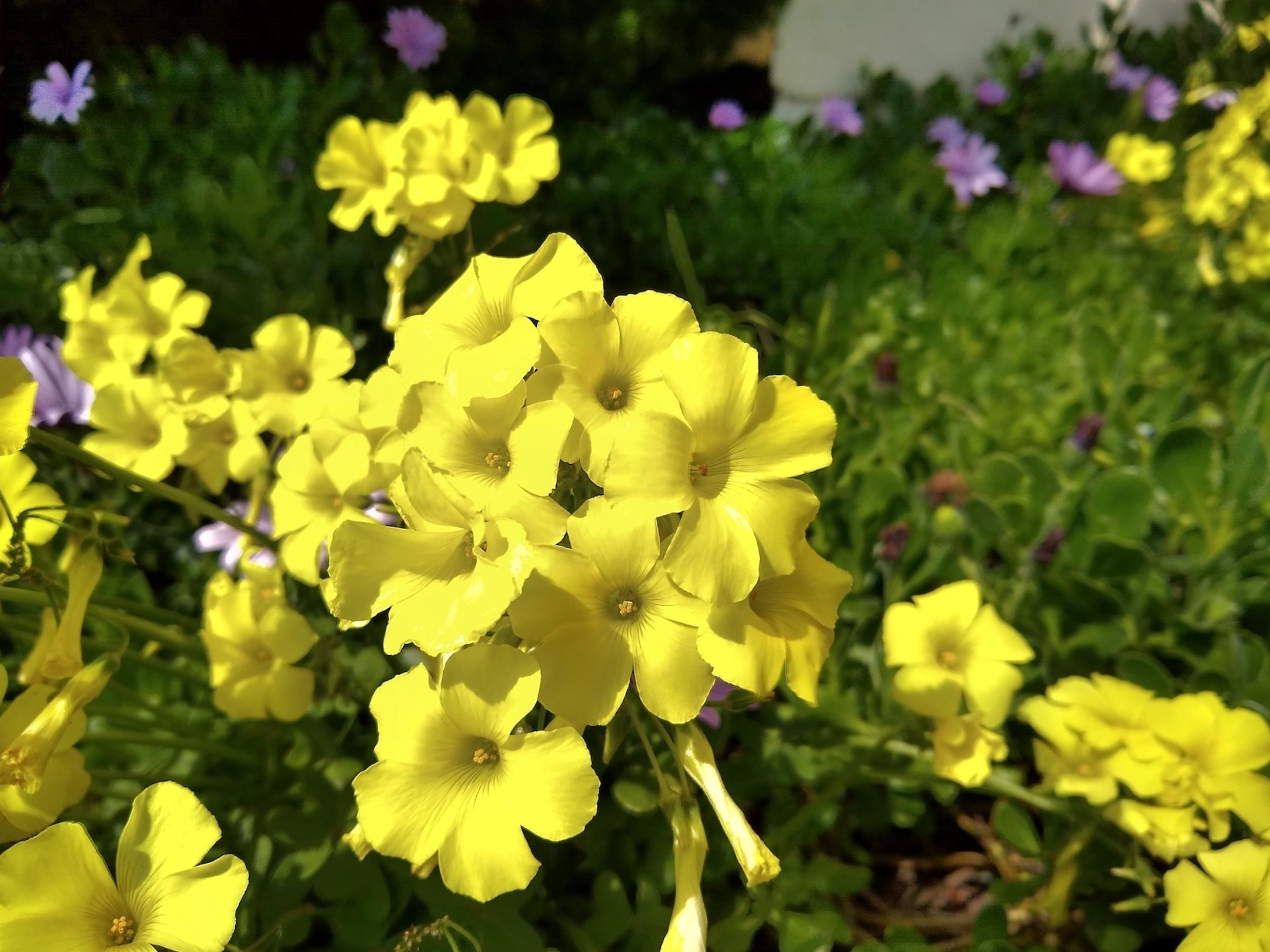 small-good-photo-yellow-flowers