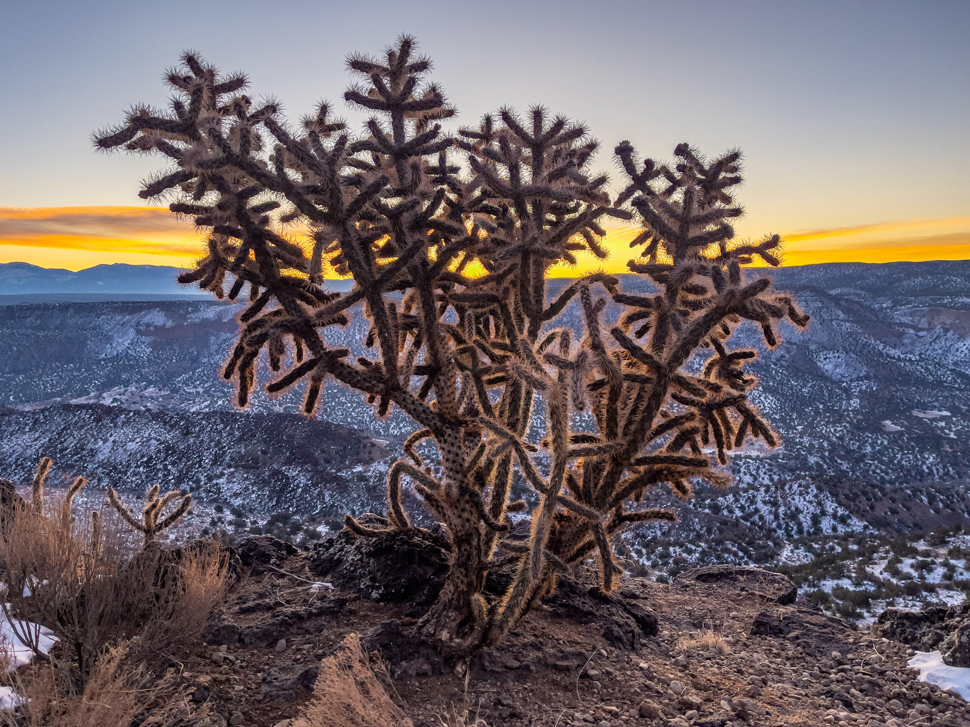 <p>The flexibility of Apple's ProRaw photo format let me show the shadow details in this backlit cactus without blowing out the colors of the bright dawn sky.</p>