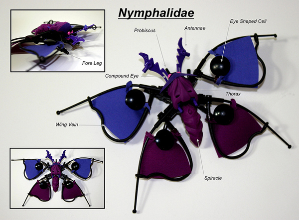 Nymphalidae: purple flora butterfly