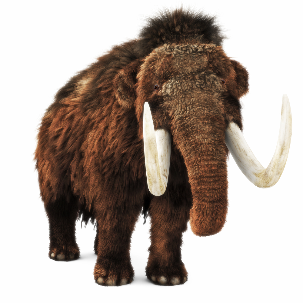 Mammoths might've produced 400 pounds of poop a day!