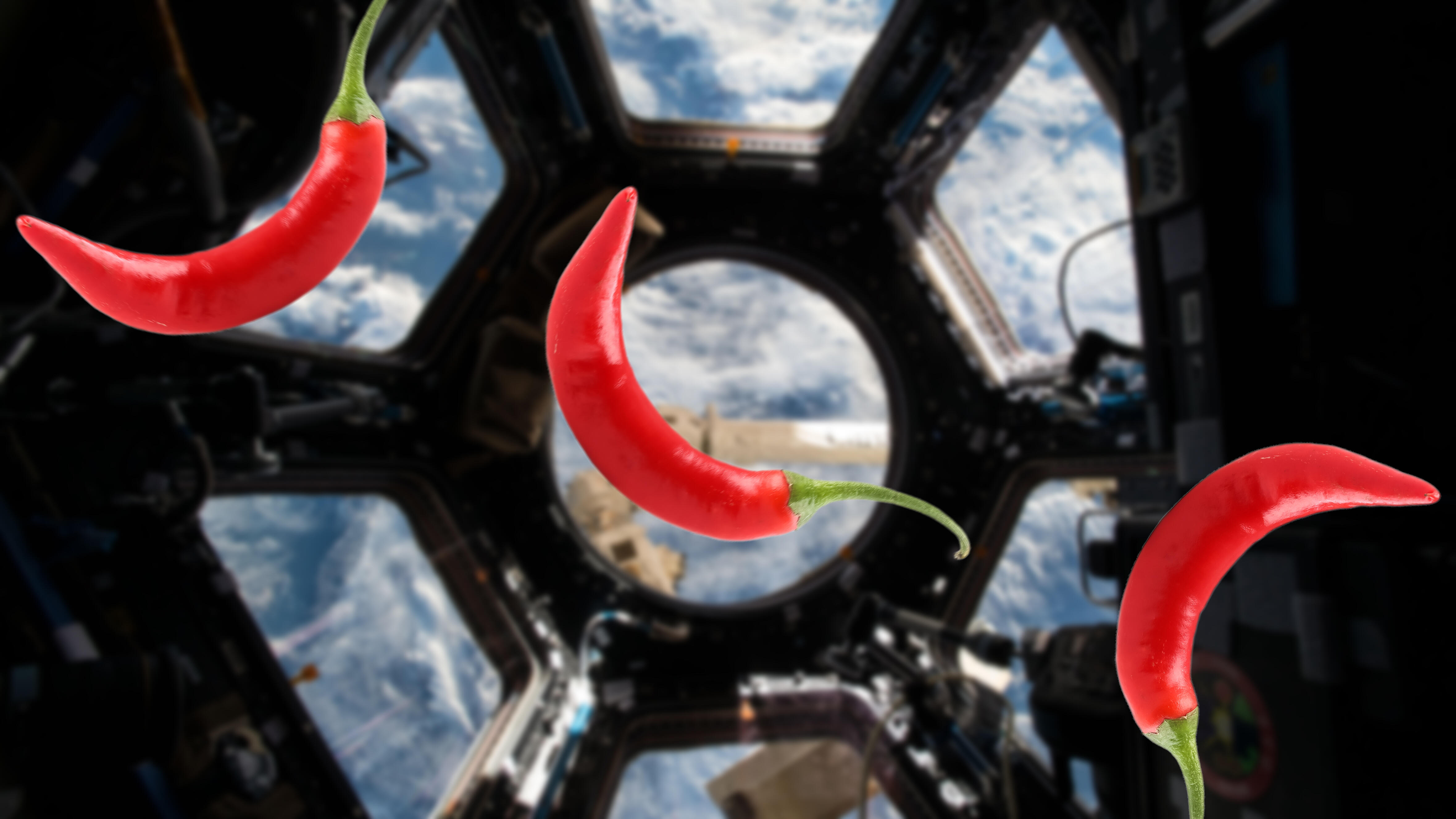 NASA is rising house chile peppers on the ISS — and astronauts will style them