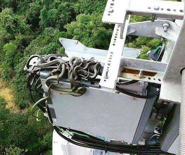 Snakes on a cell tower
