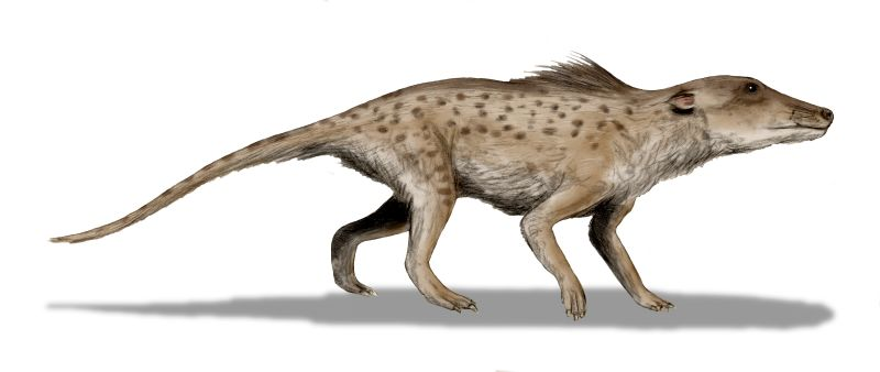 Whales had legs! And looked like rat-dogs!