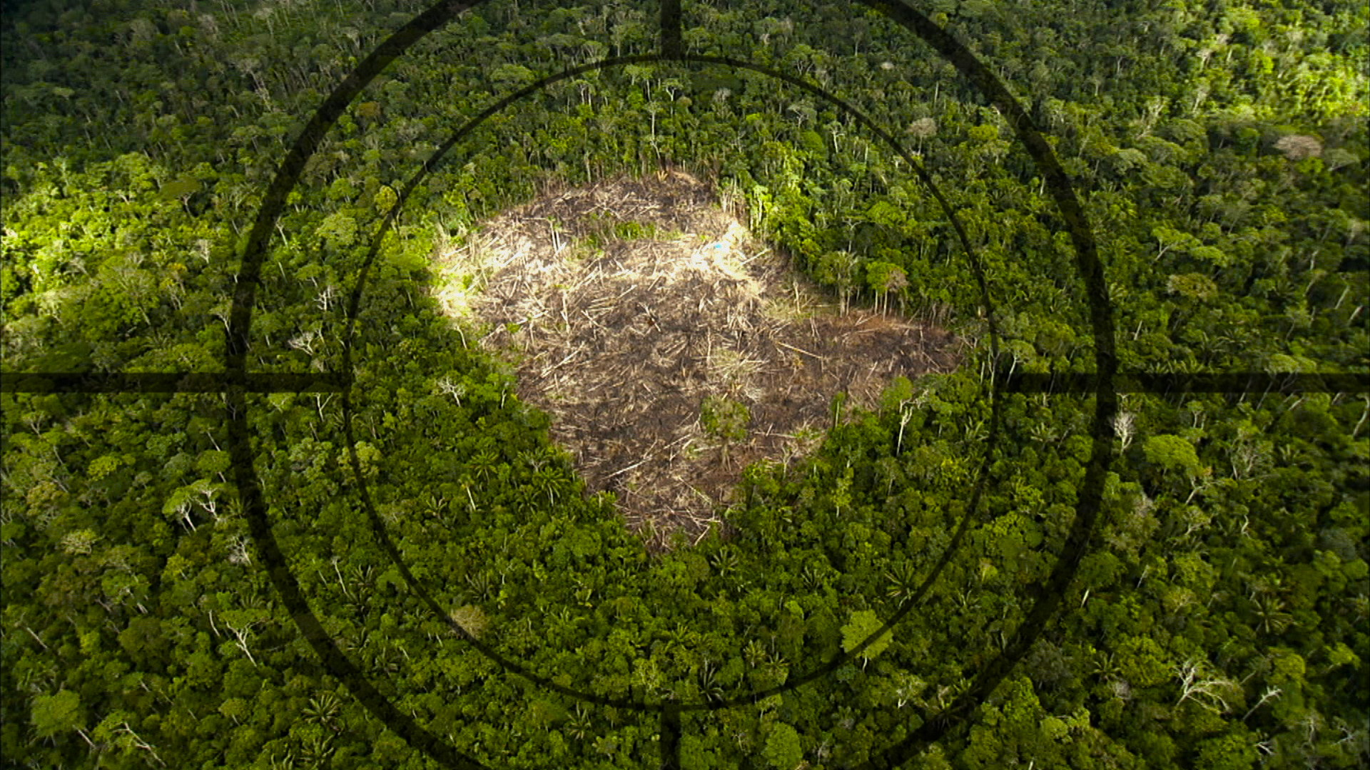 Video: On the ground and in the cloud, the fight to save the Amazon