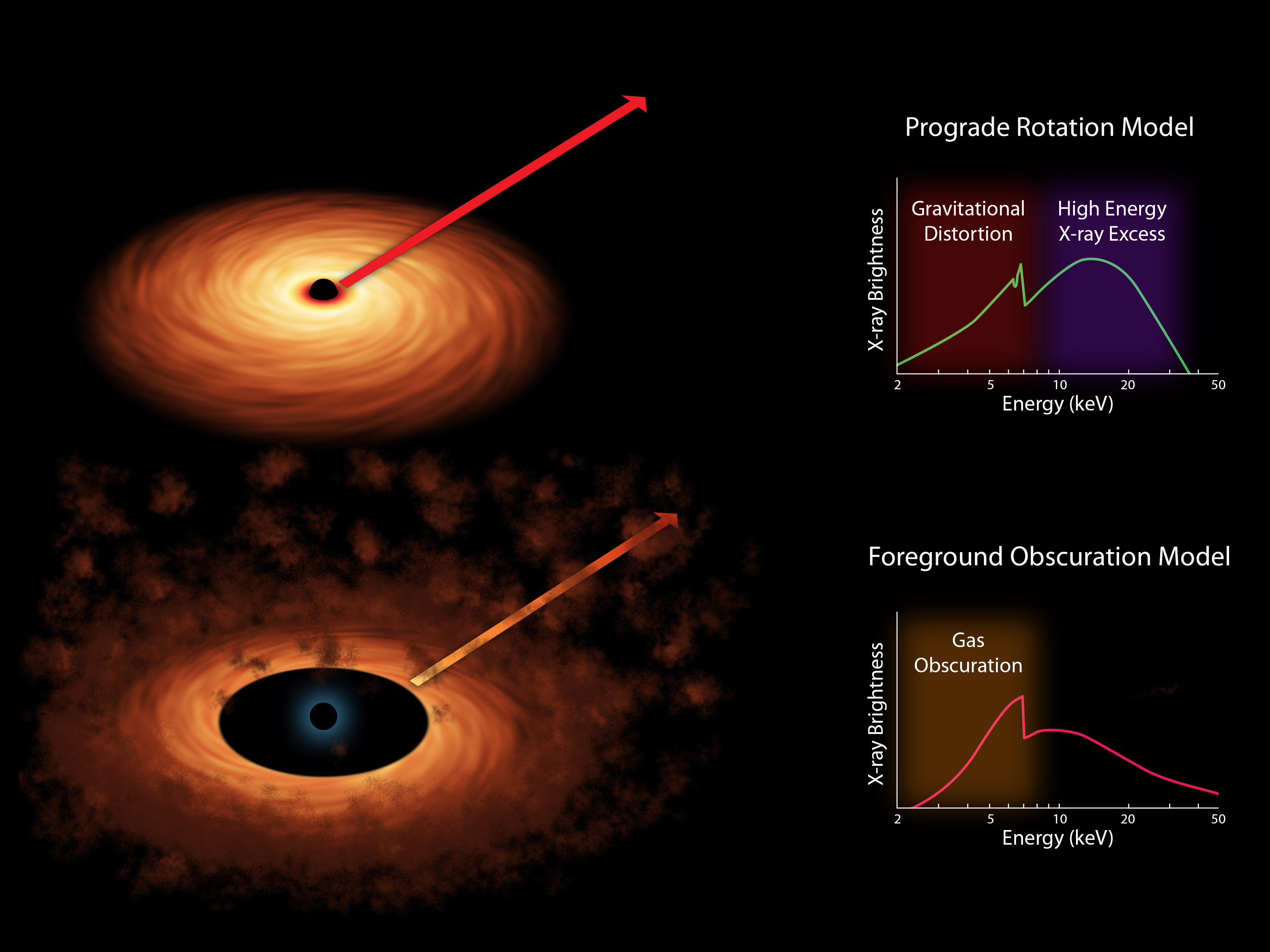 Two models of black hole spin