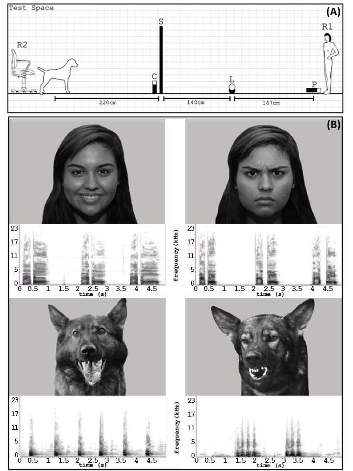 dogs-and-emotions-image.jpg