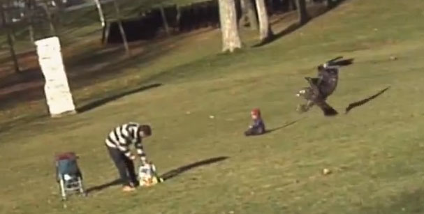 A screen capture from a fake video of an eagle briefly snatching a child.