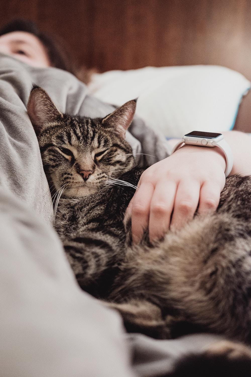 cat cuddling in bed with owner