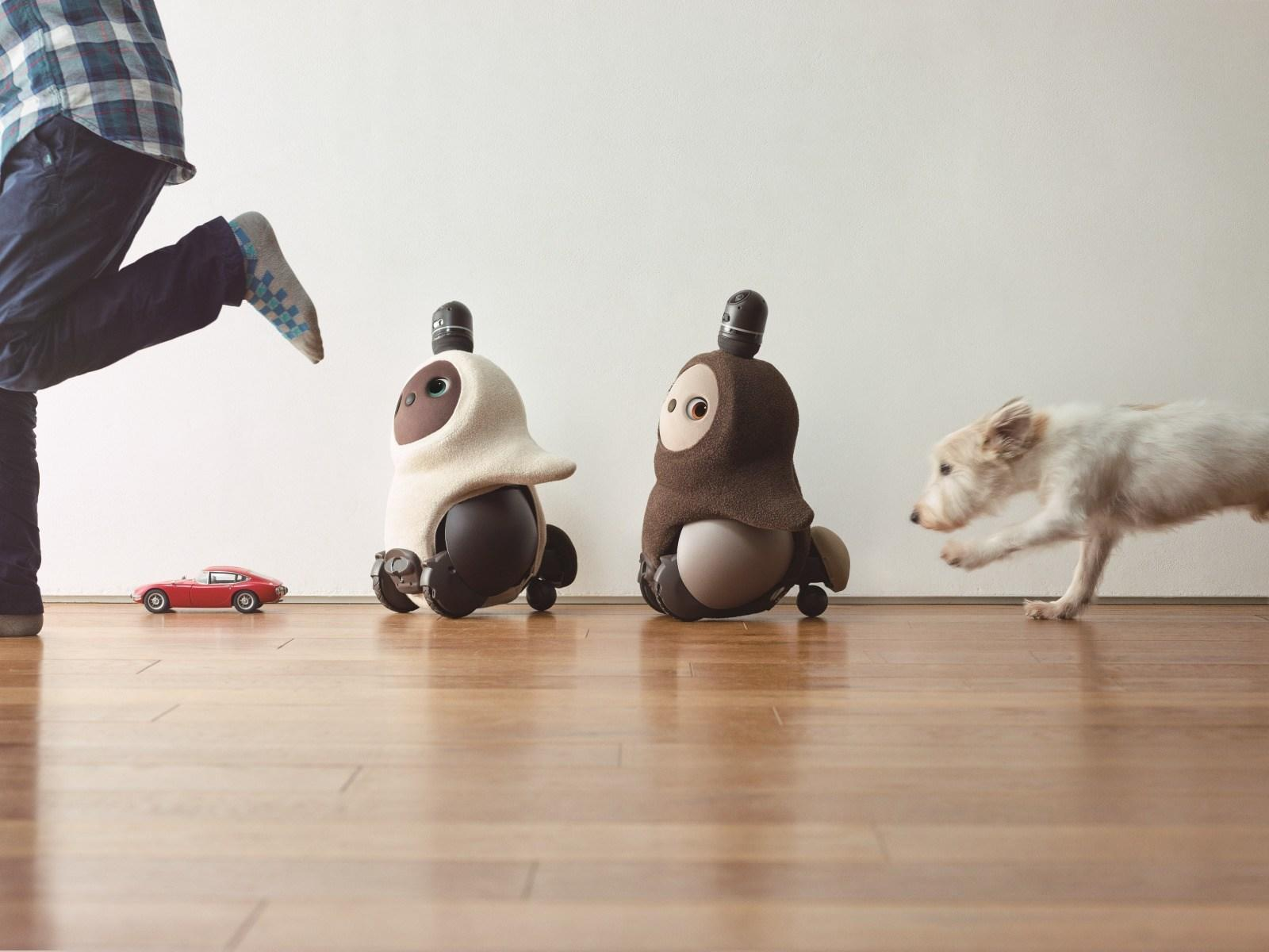 A pair of Groove X Lovot robots follow their owner.