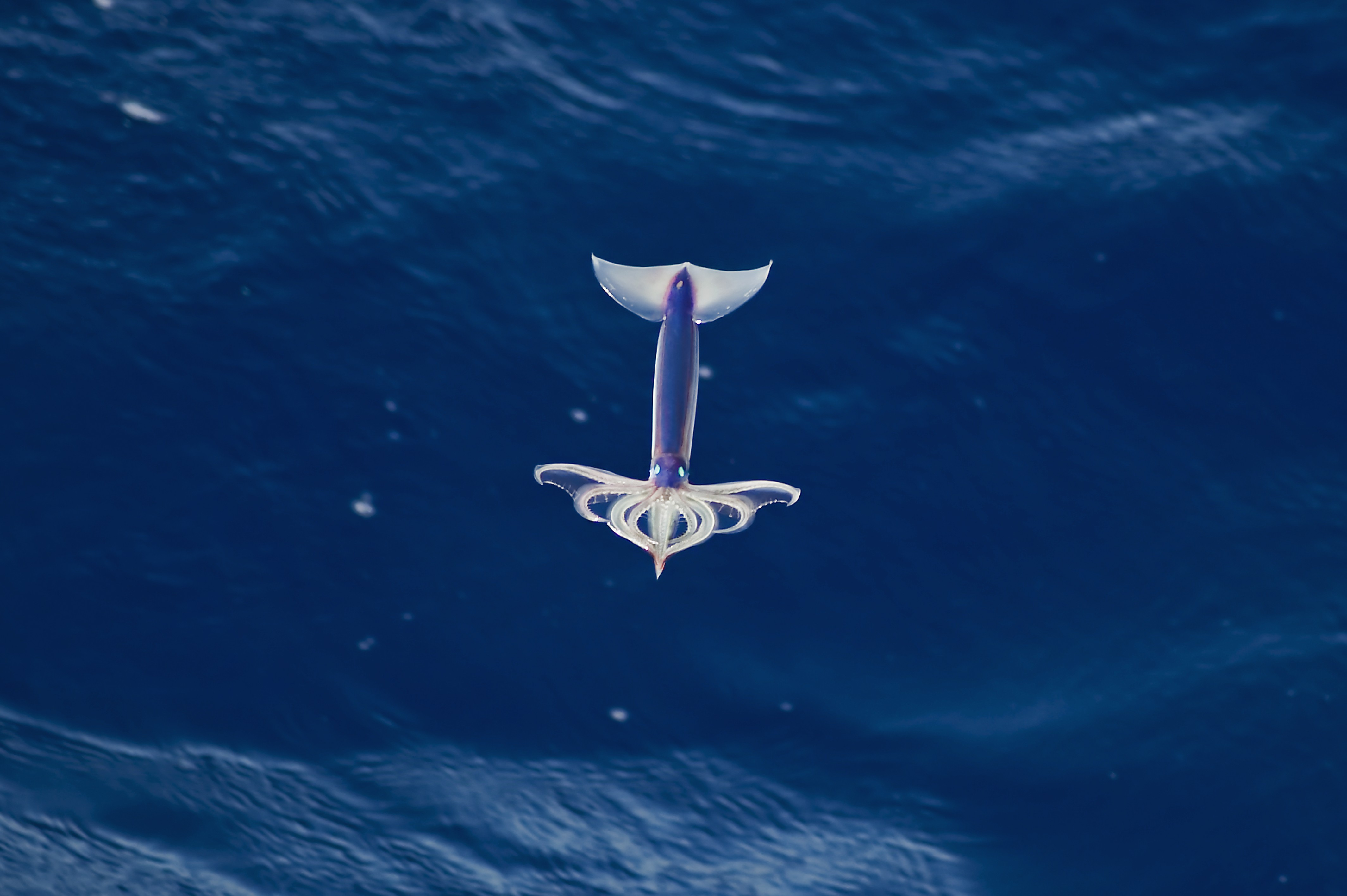 Three words: Japanese. Flying. Squid.